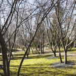 Japanilaistyylisen puutarhan kirsikkapuut 13.3.2014