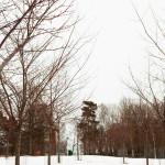 Kirsikkapuiston kirsikkapuut 2.4.2014.