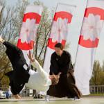 Yatagarasu ry esittää aikidoa ja iaidoa. Kuva Emilia Pippola